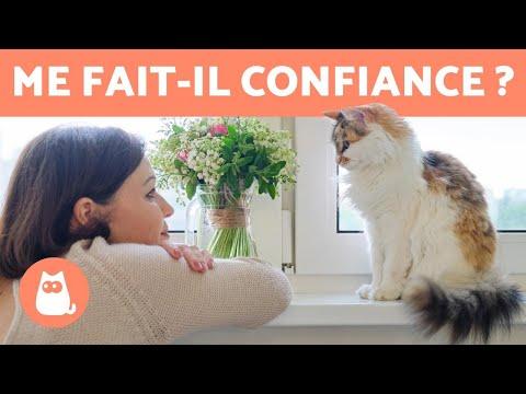 7 SIGNES Que Votre CHAT VOUS FAIT CONFIANCE