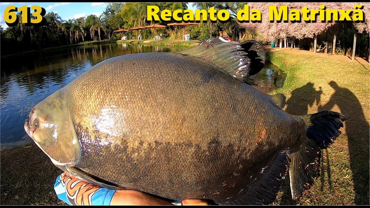 Pescaria Diferente e Radical no Recanto da Matrinxã com vídeo cassetada - Fishingtur 613