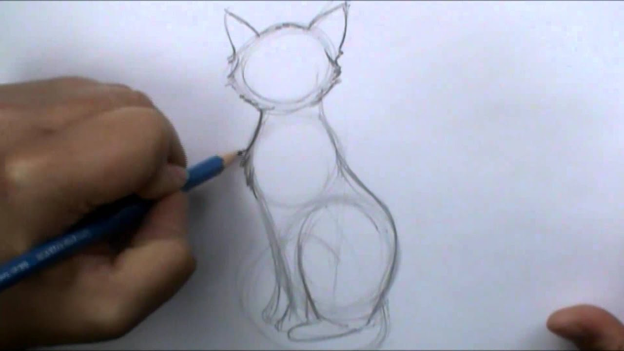 How To Draw A Basic Cat Sitting Youtube