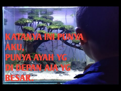 membuat-aquascape-tema-bonsai-part2