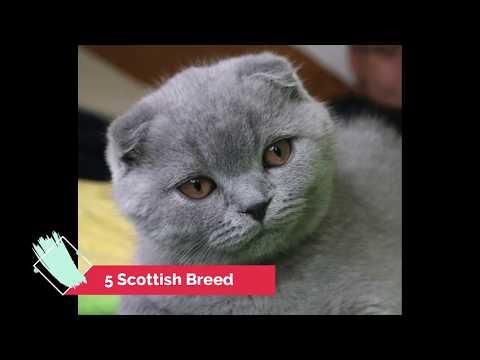 THE 5 TOP BEST CAT BREEDS