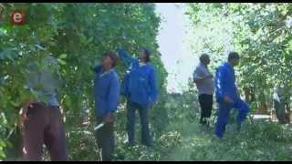 S8E09 Standard Bank - Citrus Farming Cluster
