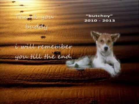 My Dog My Best Friend Died