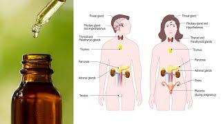 Top 7 Essential Oils to Balance Hormones Naturally