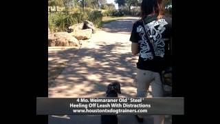 Steel Heeling Off Leash - Off Leash K9 Training Houston