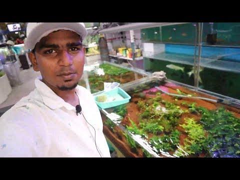 (voice Over )-aquarium Shop Review Video In Tamil