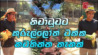 Travel With Chatura | නිවාඩුවට කුරුල්ලෝත් එක්ක නවතින්න තැනක් | Vlog 244 Thumbnail