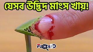 বিশ্বের সবচেয়ে মারাত্মক এবং ভয়ানক ৫টি মাংসাশী উদ্ভিদ | Top 5 Carnivorous Plants - FactsBD