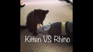 Kitten VS Rhino