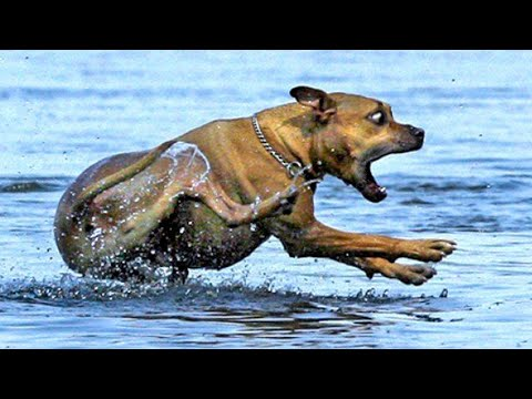 Funniest  Dogs And Cats - Try Not To Laugh - Funny Pet Animals