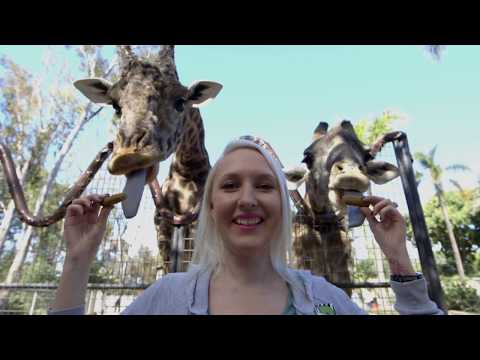 Giraffic Park - Meet the San Diego Zoo's Giraffes thumbnail
