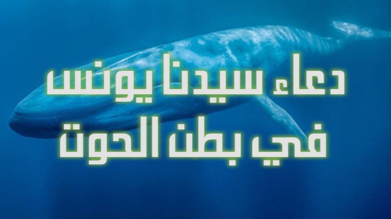 دعاء سيدنا يونس في بطن الحوت ل ا إ ل ه إ ل ا أ ن ت س ب ح ان ك إ ن ي ك ن ت م ن الظ ال م ين Youtube