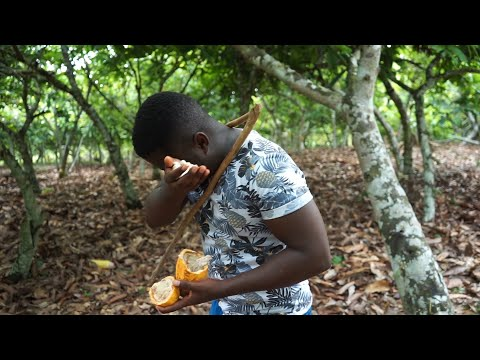 Inside My Father's 50 Acres Cocoa Farm In Ghana!