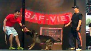 Dog Obedience Training - Hcmc Dog Show 2015