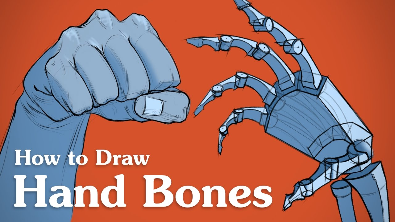 How to Draw Hand Bones - Drawing Anatomy for Artists - YouTube