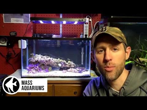 Fish Keepers Screw Ups: Episode 4: Quarantine tanks (QT TANKS)