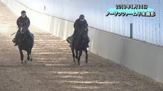 メガ フロート 馬