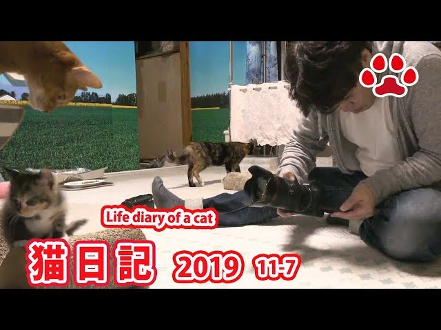 2019.11.7 みゃうの猫日記 【Miaou みゃう】