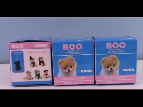 Download Boo Chubby Adorable Dog - hqdefault  Gallery_144492  .jpg