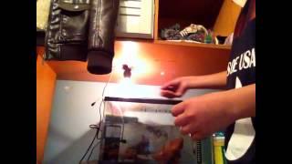 Presentación de mis tortugas TRACHEMYS VENUSTA ( tortuga pavo real ) suscribanse y denle LIKE :)