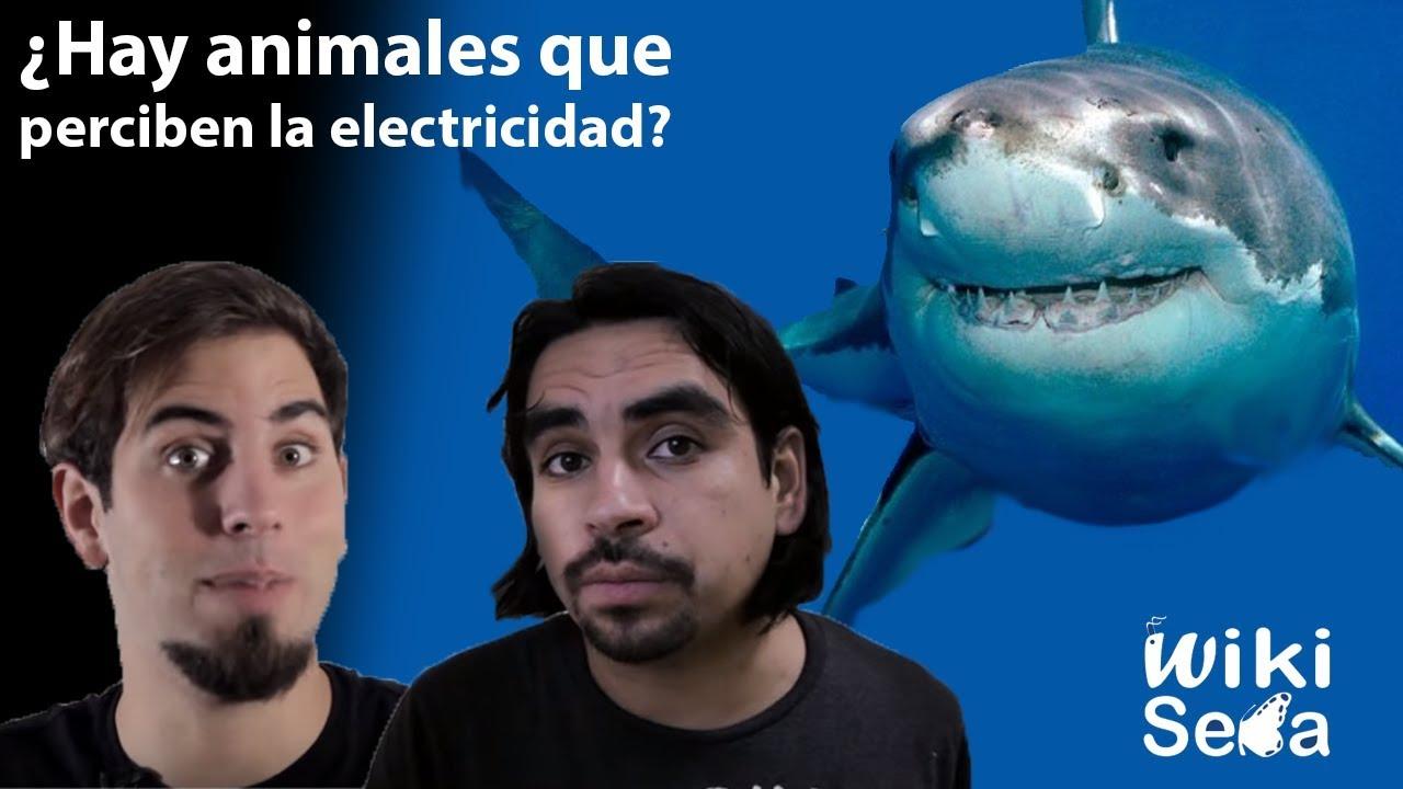 ¿Hay animales que perciben la electricidad? ( Con Sígueme la Corriente)