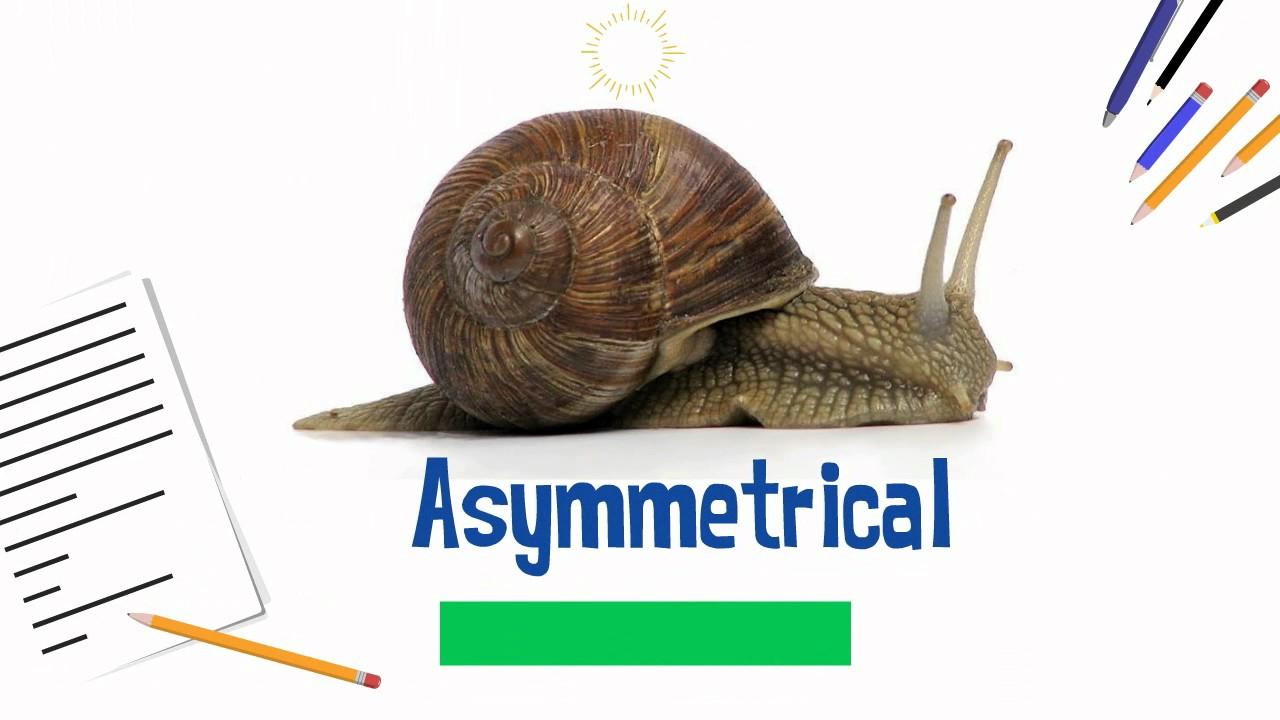 asymmetrical animals youtube