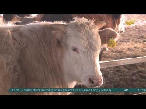 Видео Россия объемы продаж металлопроката за 2013 год