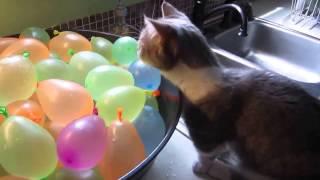 Смешное видео про котов  Вот это прикол!