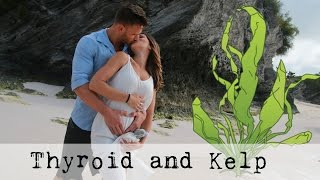Thyroid and Metabolism | Kelp Hashimoto and Thyroid Hormone: Thomas DeLauer