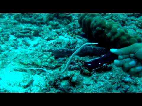 Reef life of Tioman Island, Malaysia