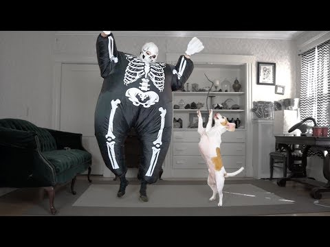 Dog Dances w/Skeleton Chub Suit Man: Funny Dog Maymo