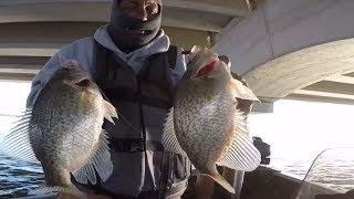 **We Found The Motherload Of Crappie**  !!!Crappie Fishing Superbowl!!!