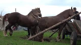 Big Horse Hard Mating Compilation 2019 | Horse breeding | Animals Mating