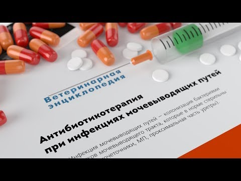 Антибиотики при инфекциях мочевыводящих путей