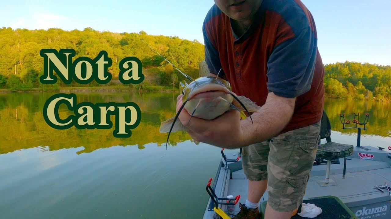 A fish broke my hook!!! Carp fishing in a Catfish boat ...