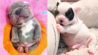 Baby Dogs - Cute and Funny Dog Videos Compilation (2019)