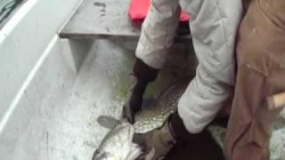 KB 8,6 kg gedde i Bagsværd sø marts 2009