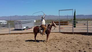 2000 Paint Horse Sorrel Overo Gelding For Sale.  Great All Around Horse.
