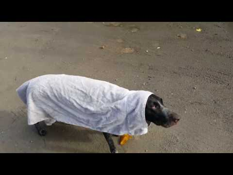 Luna The Pointer Funny 2016