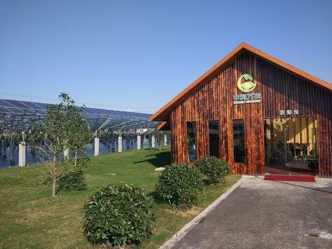 TALESUN SOLAR - Eco Agricultural Solar PV  Installation