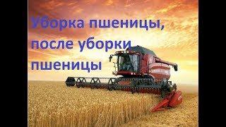 Уборка пшеницы, после уборки пшеницы