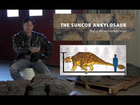 Discovery of Ankylosaur at Suncor's Millennium Mine