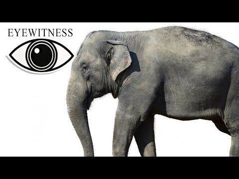 EYEWITNESS | Mammal | S2E5