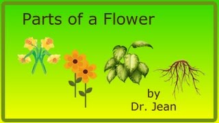 parts of a flower by dr jean