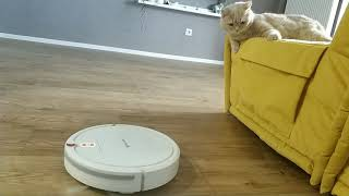 Кот и робот пылесос Kit Fort KT-531. Теперь у нашего кота появился друг:)