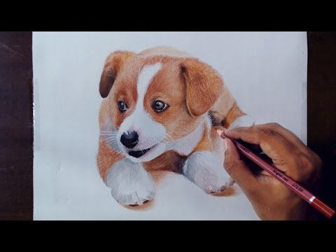 drawing-animals-2---drawing-a-puppy---colored-pencils