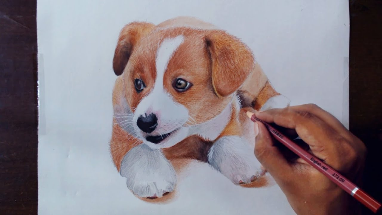 drawing animals 2 drawing a puppy colored pencils youtube