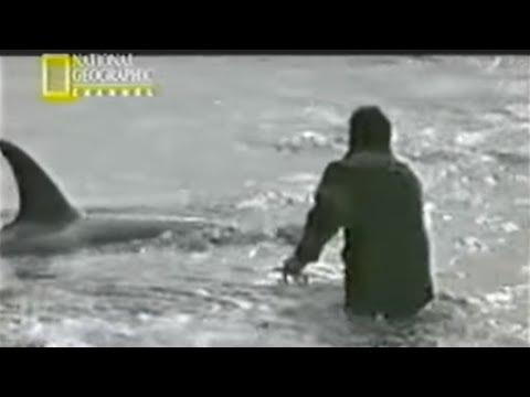 Roberto Bubas Orcas National Geographic 2002