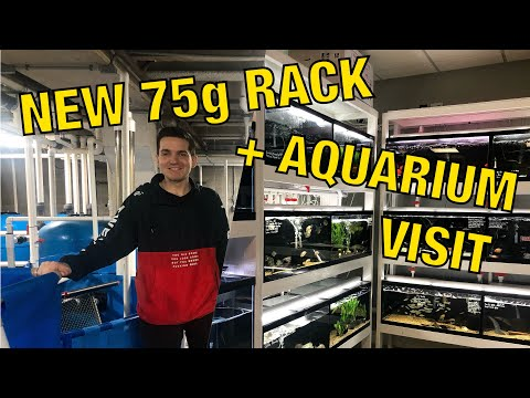 More New Tanks + Aquarium Adventure (monster Fish + Behind The Scenes!)