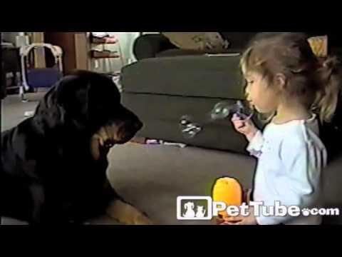 Bubbly Toddler and Her Rotty- PetTube